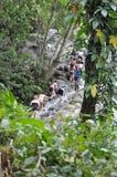 Dunns flodnedgångar i Ocho Rio de Janeiro, Jamaica Fotografering för Bildbyråer