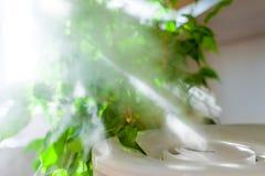 Dunst från luftfuktaren nära houseplants Arkivfoto