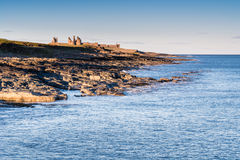 Dunstanburgh Castle from Craster Harbour Royalty Free Stock Photos