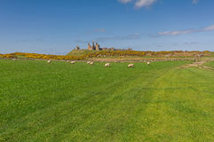 Dunstanburgh Castle Royalty Free Stock Photos
