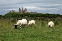 Dunstanburgh Castle View. Dunstanburgh Castle stands on a remote headland in Northumberland. The castle was built at a time when relations between King Edward II Royalty Free Stock Image