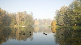 Dunstiger Morgen im Herbstpark Lizenzfreies Stockbild