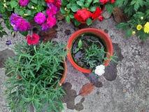 Duntus blom och med knoppar Royaltyfria Foton