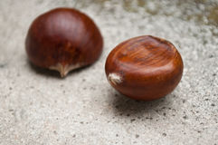 Duo of chestnuts. Closeup duo of chestnuts on stoned background Royalty Free Stock Photo