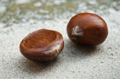 Duo of chestnuts Stock Photo