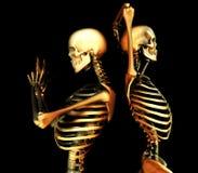 Duo de crâne illustration stock