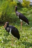 Duo dell'uccello Immagine Stock Libera da Diritti