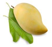 Duo della frutta del mango con i gambi Immagine Stock