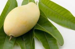 Duo della frutta del mango con i gambi Fotografia Stock Libera da Diritti