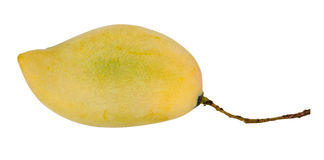 Duo della frutta del mango con i gambi Immagine Stock Libera da Diritti