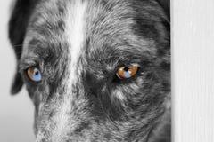 Duo Eyes Royalty Free Stock Image