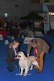 Duo internacional CACIB da exposição de cães em Brno Fotografia de Stock
