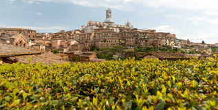 Duomodomkyrka av Siena i vår italy tuscany Royaltyfri Fotografi
