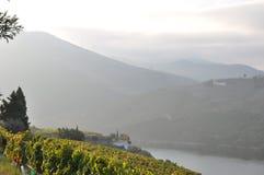 duoro winnica romantyczny dolinny Obraz Stock