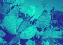 Duotone κάκτων στη δονούμενη τολμηρή υπεριώδη ακτίνα και τα μπλε ολογραφικά χρώματα κλίσης Τέχνη έννοιας Τομέας κάκτων Κήπος των  διανυσματική απεικόνιση
