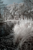 Duotone infrared lake Stock Images
