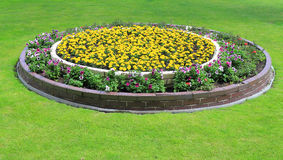 Duplex flowerbed on a lawn. Landscape design - duplex flowerbed on a lawn Royalty Free Stock Photo
