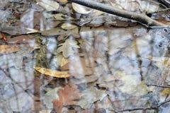 Duplicar los árboles en el agua del bosque imagen de archivo