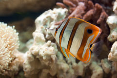 Durée dans l'aquarium image libre de droits