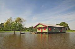 Durée dans la jungle d'Amazone photo libre de droits