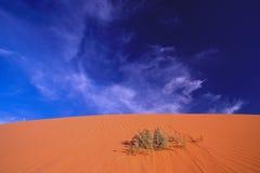 Durée dans le désert rose Image libre de droits