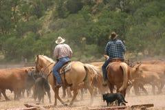 Durée de cowboy images libres de droits