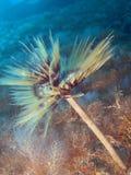 Durée de mer d'Aegian Photo libre de droits