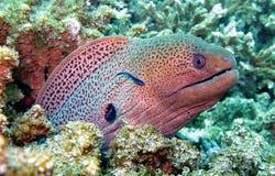 Durée de mer dans le récif coralien photographie stock libre de droits