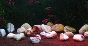 Durée de mer sous-marine clips vidéos
