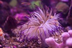 Durée de poissons et de mer Photo stock