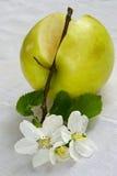 Durée de pomme verte photographie stock libre de droits