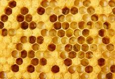 Durée et reproduction des abeilles images stock