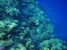 Durée marine 14 photo libre de droits