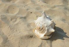 Durée marine Photographie stock