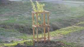 Durée neuve Centrales croissantes Élevez les arbres en parc banque de vidéos