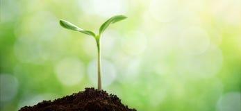 Durée neuve Jeune pousse dans le printemps Concept de jour de terre photos stock