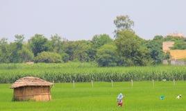 Durée rurale en Inde : zones de blé, producteurs, huttes image stock