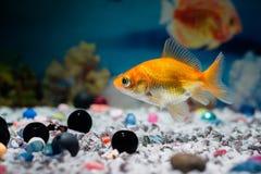 Durée sous l'eau Photo libre de droits