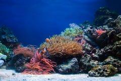 Durée sous-marine, poisson, récif coralien Photographie stock