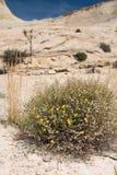 Durée sur le désert Photographie stock libre de droits
