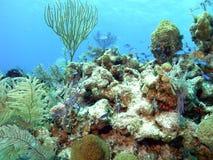 Durée sur le récif Images stock