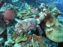 Durée sur le récif Images libres de droits