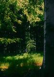 Durée toujours avec l'arbre de mélèze de source photo stock