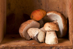 Durée toujours avec les champignons de couche blancs de boletus de forêt Images stock