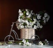 Durée toujours avec les fleurs de la cerise Photographie stock libre de droits