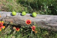 Durée toujours avec les pommes vertes image stock