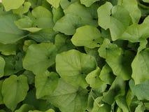 Durée verte Images stock
