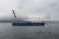 Sea and gulls stock photos
