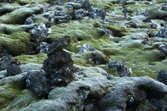 Durable moss on volcanic rocks in Iceland Royalty Free Stock Photography