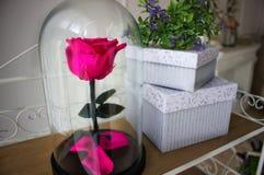 Durable s'est levé dans un flacon, s'est levé dans un dôme en verre, stabilisé, un cadeau, s'est levé en verre, rose préservée, d photo stock